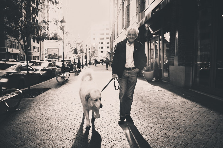 dog, man, pedestrian