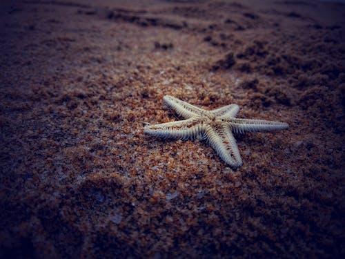 คลังภาพถ่ายฟรี ของ ขาว, ดวงดาว, ตาย, ทะเล