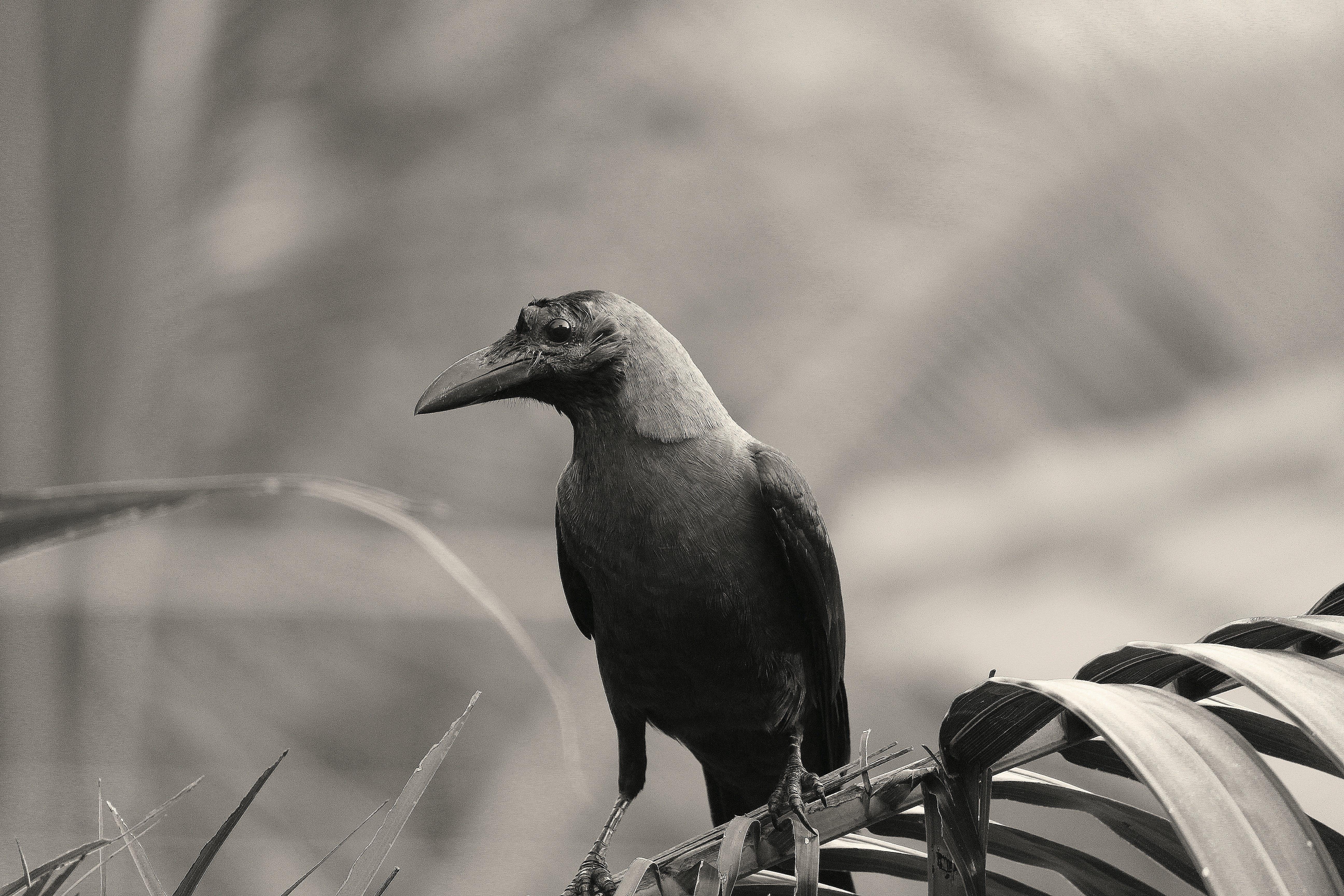 검은색, 공원, 까마귀, 블랙 앤 화이트의 무료 스톡 사진