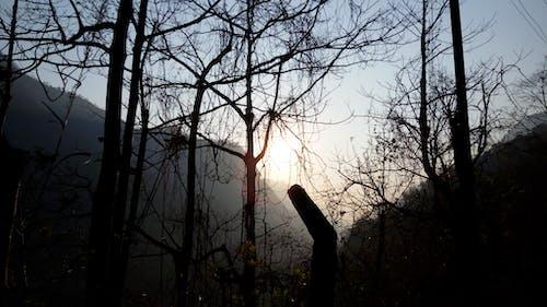 Darmowe zdjęcie z galerii z ciemny, ciemny las, kerala, las