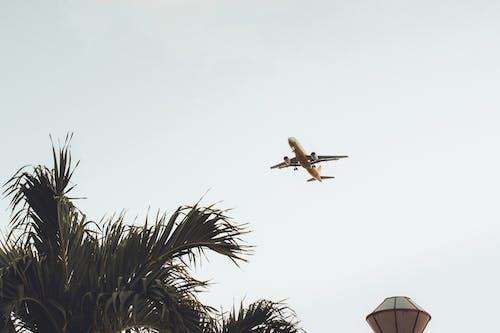 Gratis lagerfoto af dagslys, fly, flyrejse, flyvemaskine