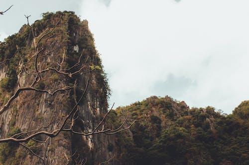 Gratis lagerfoto af bjerg, dagslys, eventyr, grene
