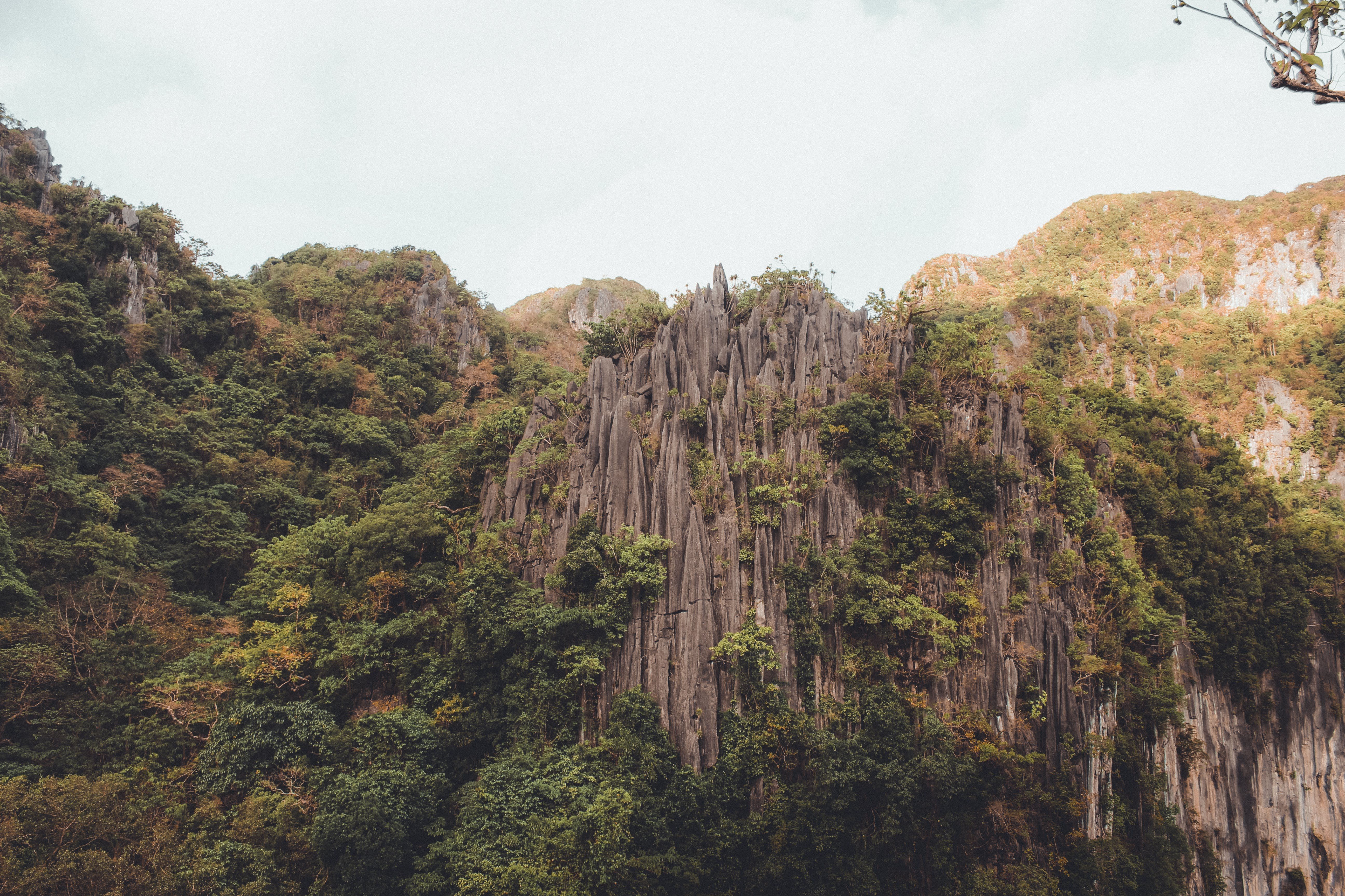 Photo of Gray Rock Formation With Trees at Daytime