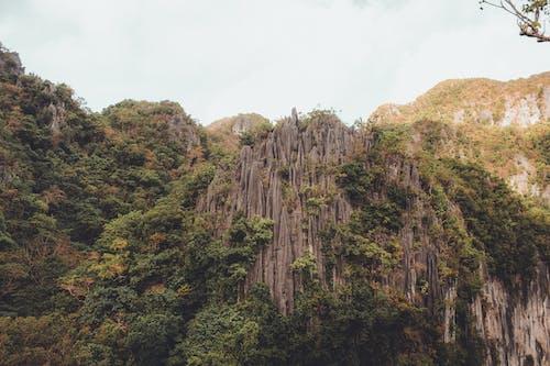 Photos gratuites de arbre, caillou, colline, forêt tropicale