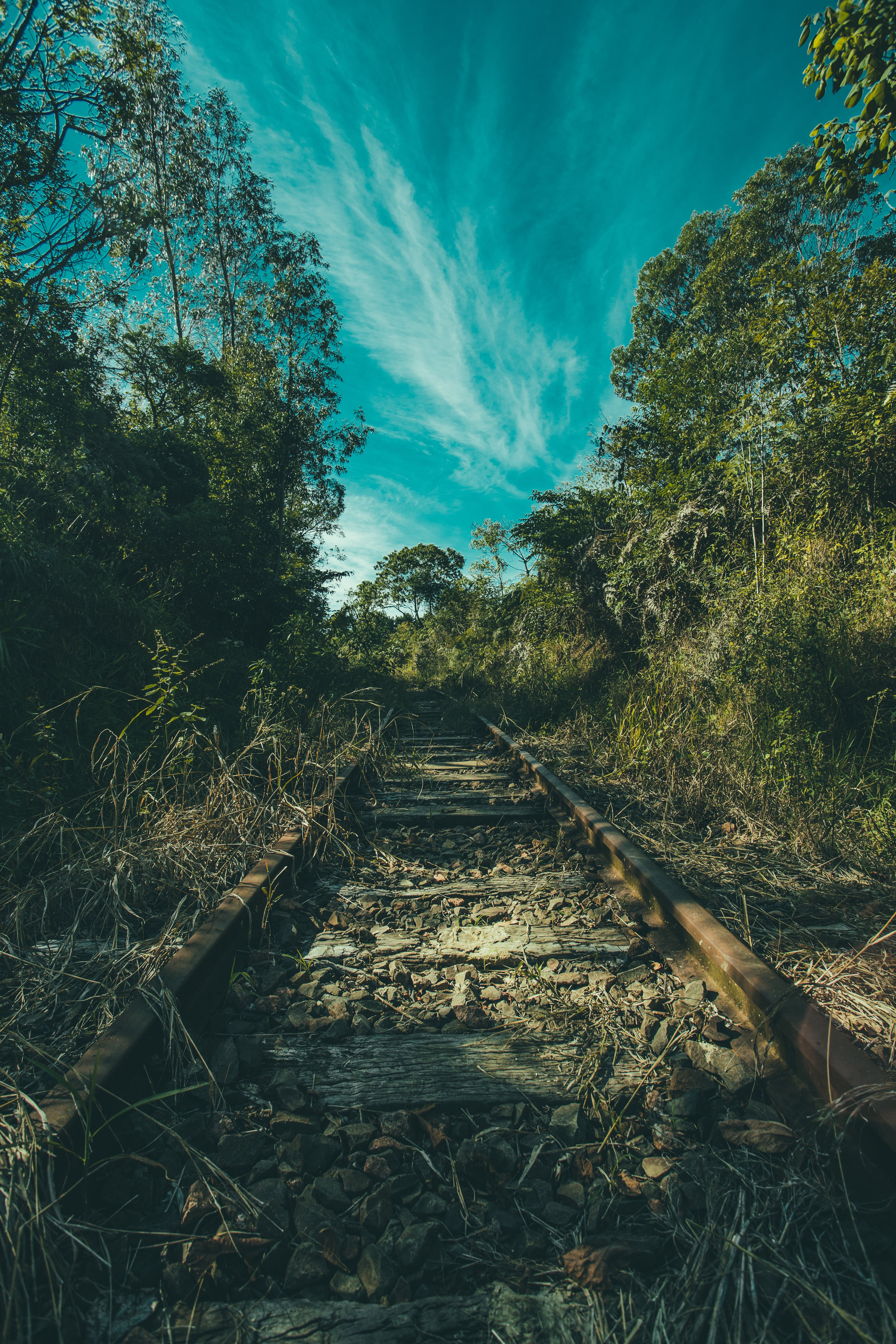 Kostenloses Stock Foto zu bäume, eisenbahn, felsen, gras