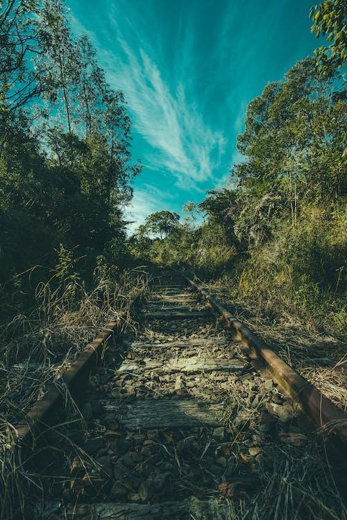 Ilmainen kuvapankkikuva tunnisteilla junanrata, kivet, luonto, puut