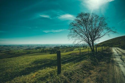 Ingyenes stockfotó dombok, ég, földes út, fű témában