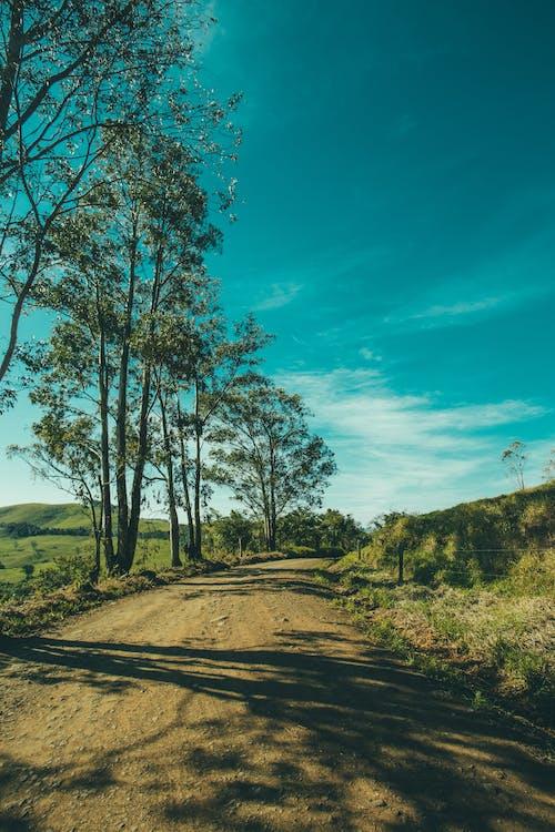 Безкоштовне стокове фото на тему «блакитне небо, Денне світло, дерева, дорога»