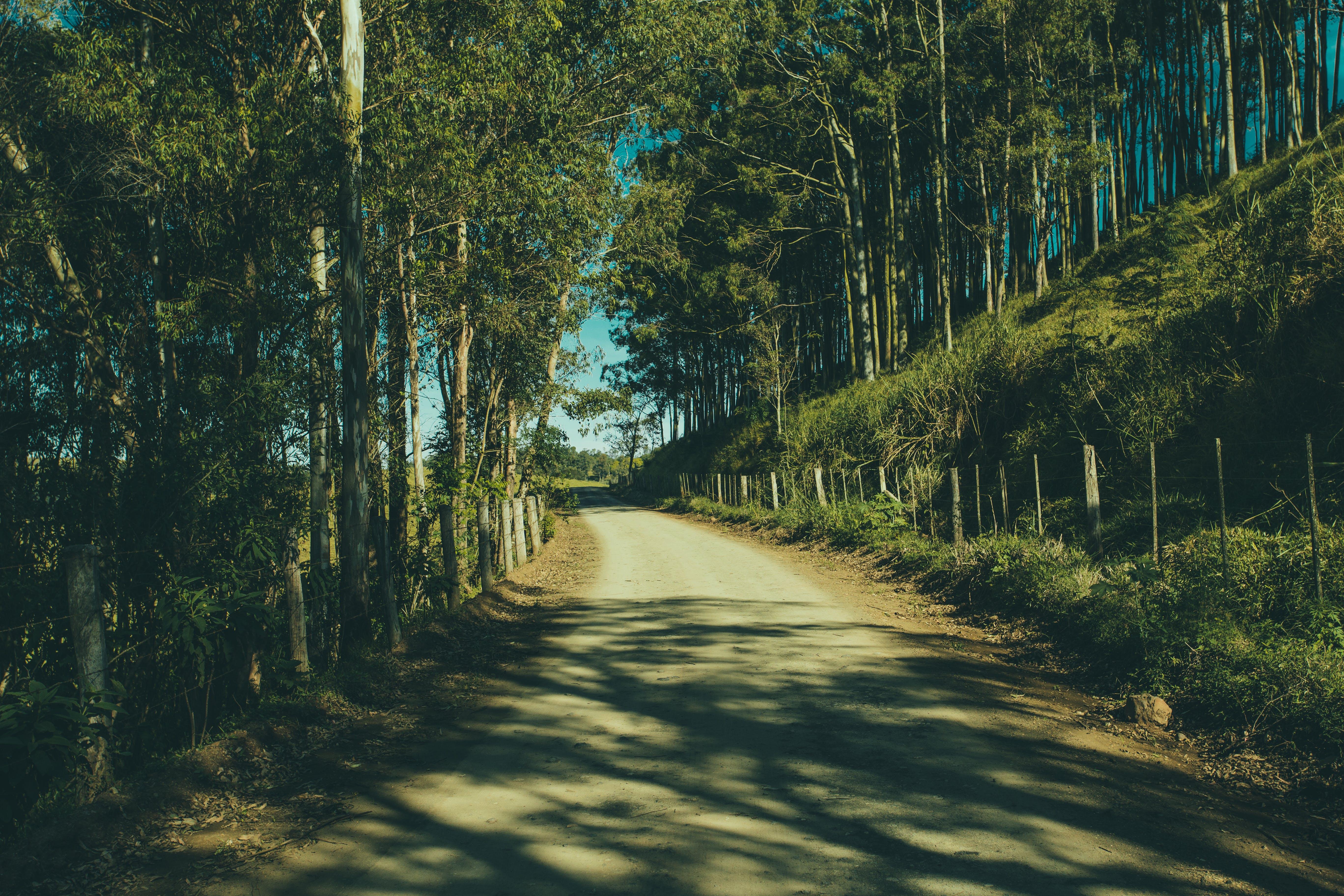 나무, 도로, 비포장 도로