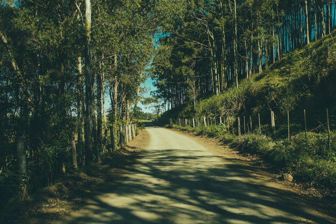 bäume, feldweg, gras