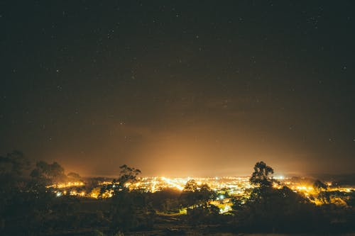 City Lights Surrounded by Trees during Nighttime