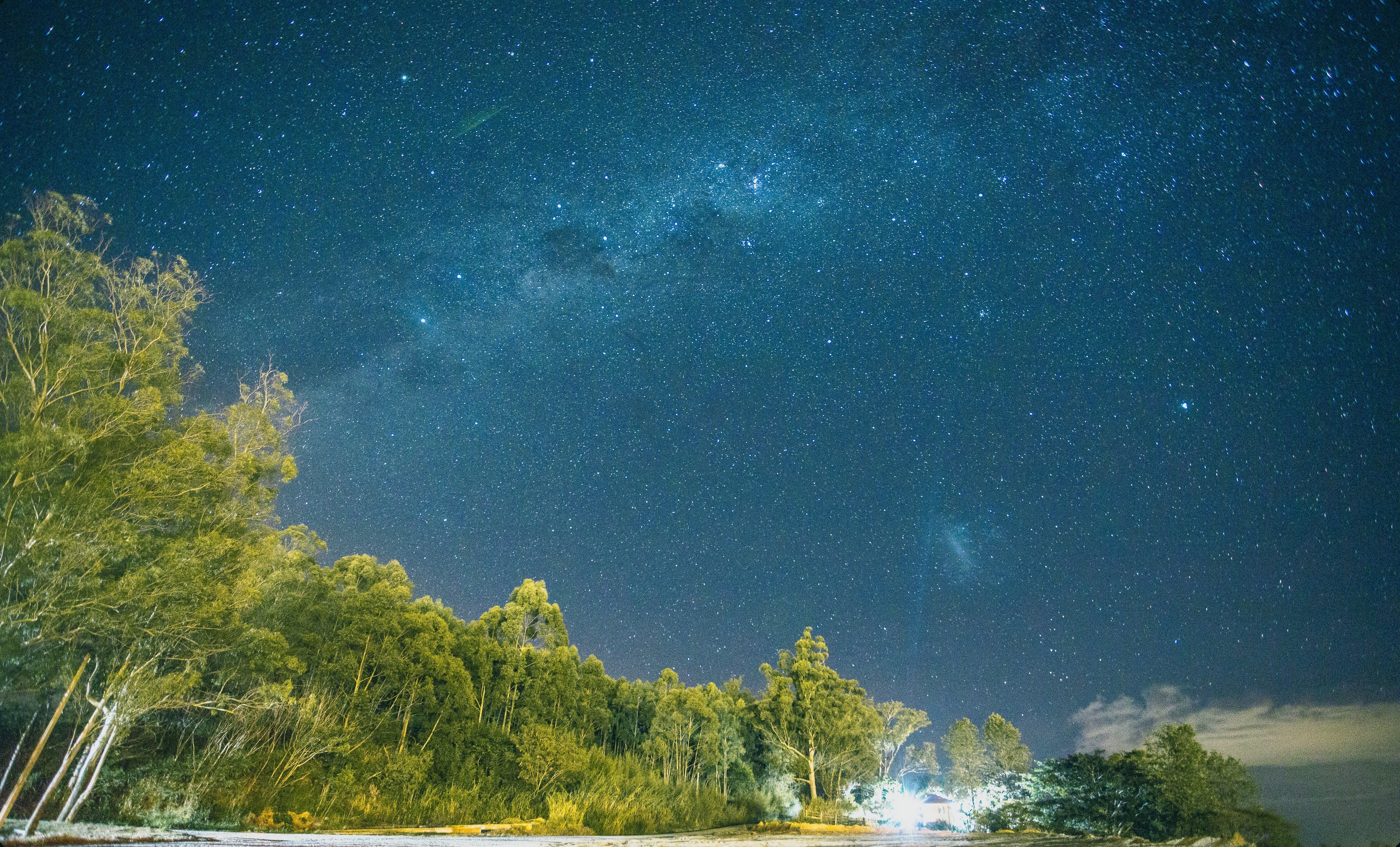 Low-angle Photography of Trees Under Nebula Stars