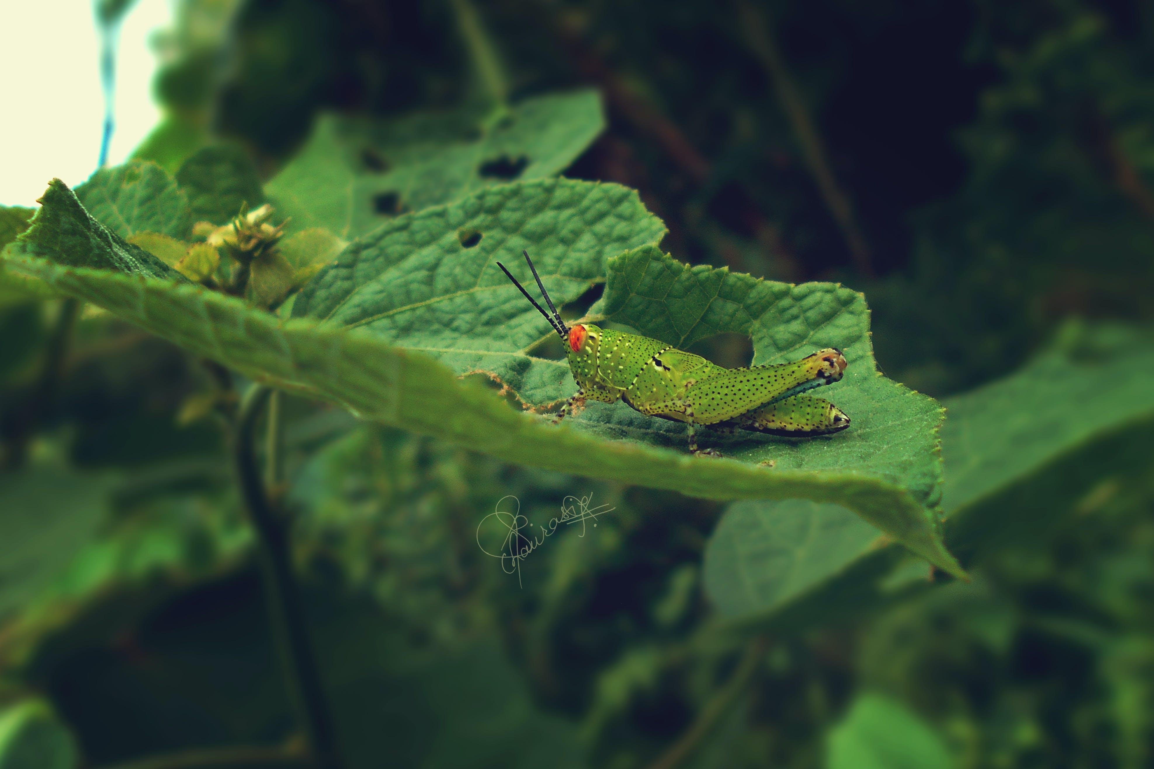 Free stock photo of beautiful, fauna, flora, garden
