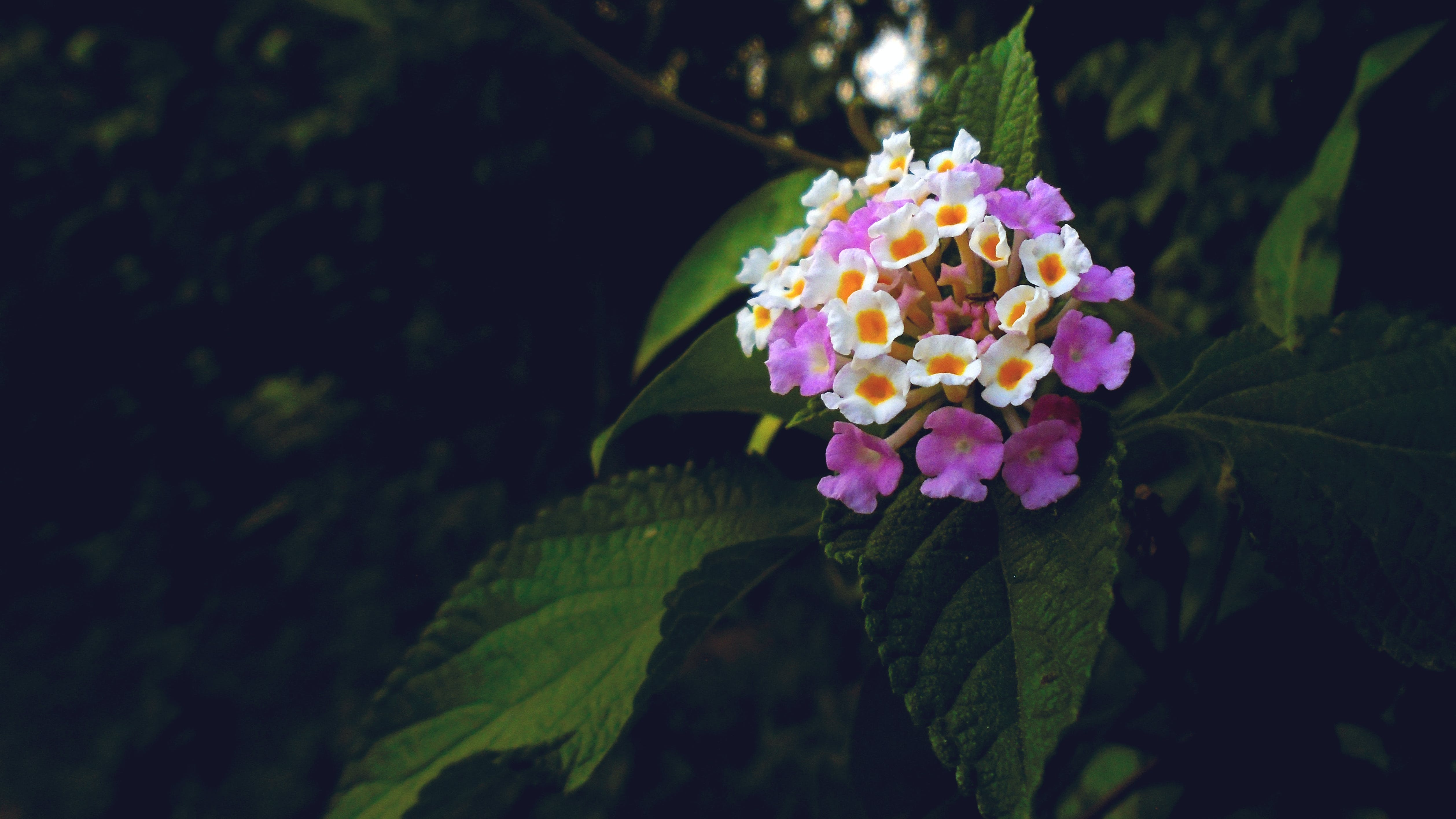 Free stock photo of bunch, bunch of flowers, dslr, flower
