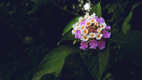 Gratis arkivbilde med appelsin, blomst, blomsterbukett, bunt