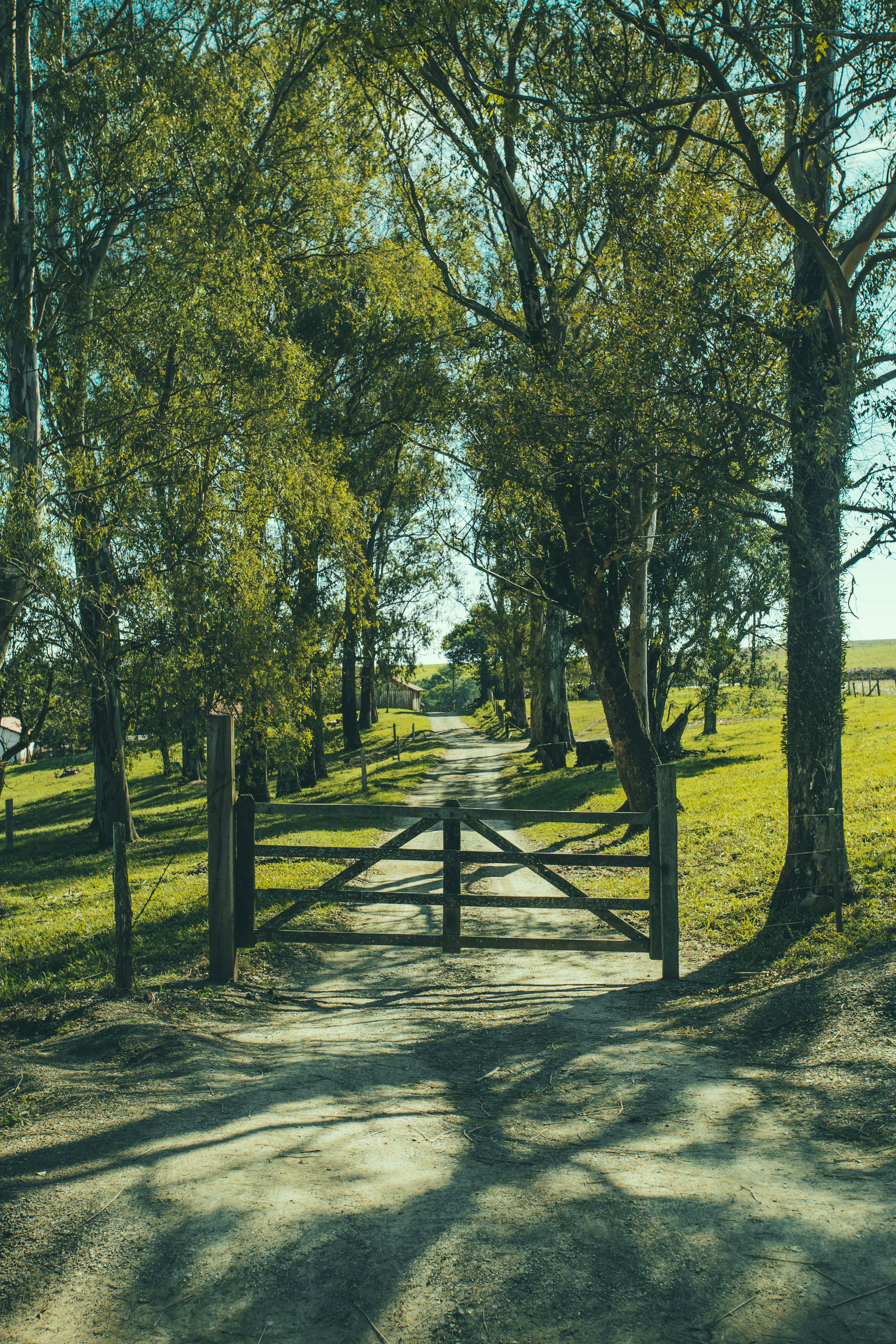 Road With Fence in Between of Green Trees
