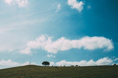 Základová fotografie zdarma na téma hřiště, krajina, mraky, obloha