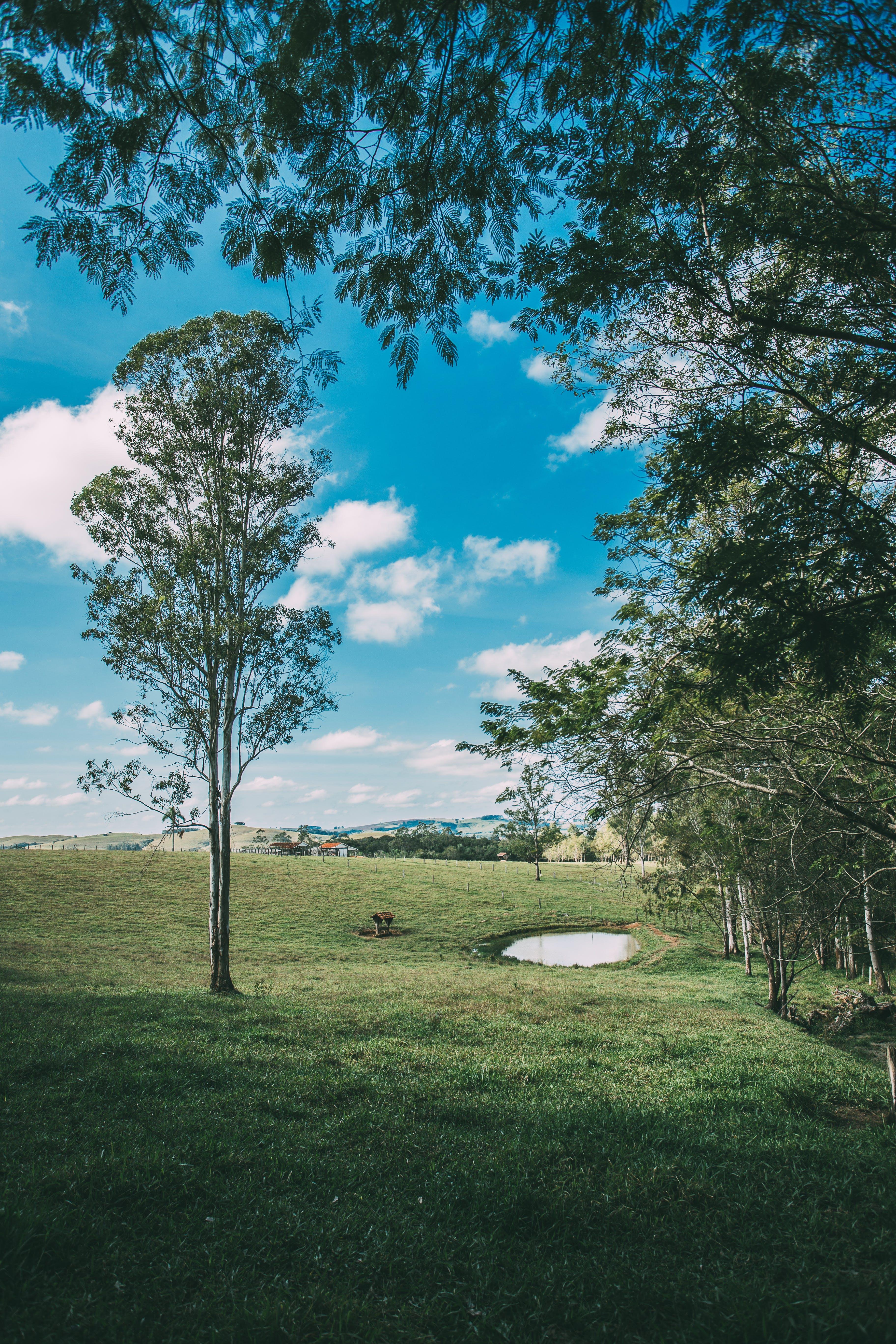 Ingyenes stockfotó évszak, fák, felhők, festői témában