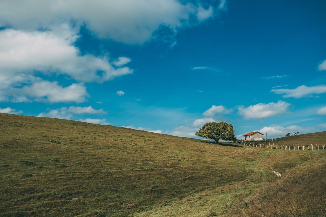 Landschaftsfoto Von 1 Baum Und Haus