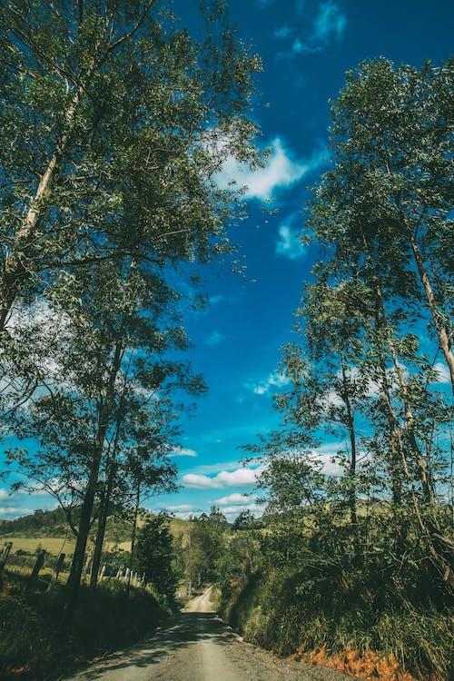 Δωρεάν στοκ φωτογραφιών με γραφικός, δέντρα, δρόμος, θέαμα