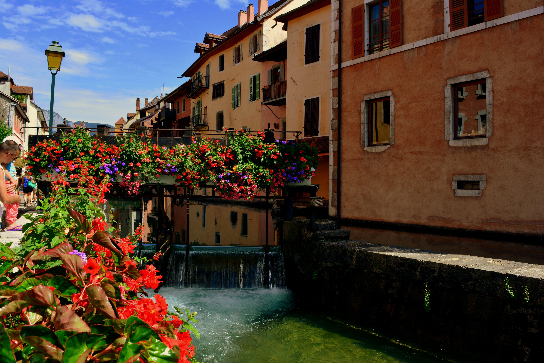 Free stock photo of bridge, flower, water