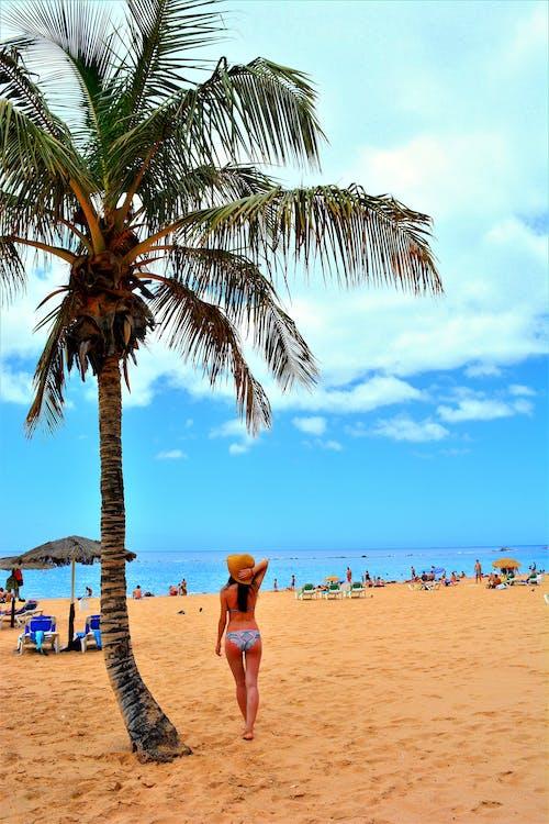 Free stock photo of girl, palm tree