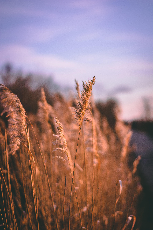Kostenloses Stock Foto zu dämmerung, gras, hell, landschaft