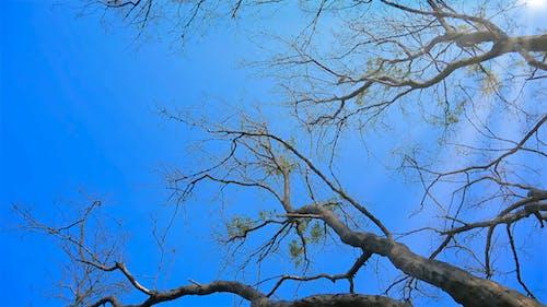 Foto stok gratis alam, biru, cabang, fotografi sudut rendah