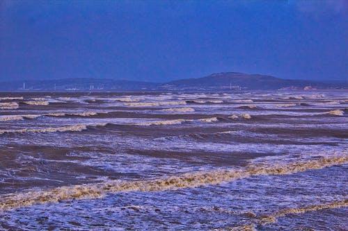 Foto stok gratis angsa teluk, busa laut, gelombang, gelombang swansea