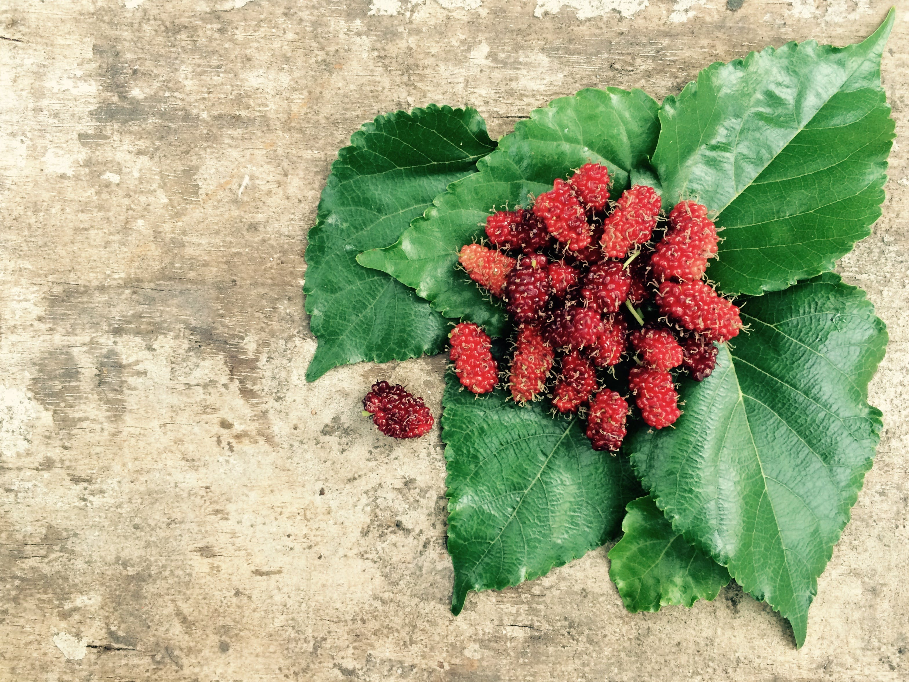 Red Fruit and Green Leaf