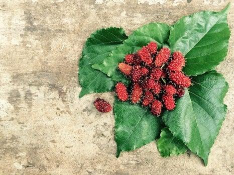 Kostenloses Stock Foto zu essen, pflanze, früchte, blätter