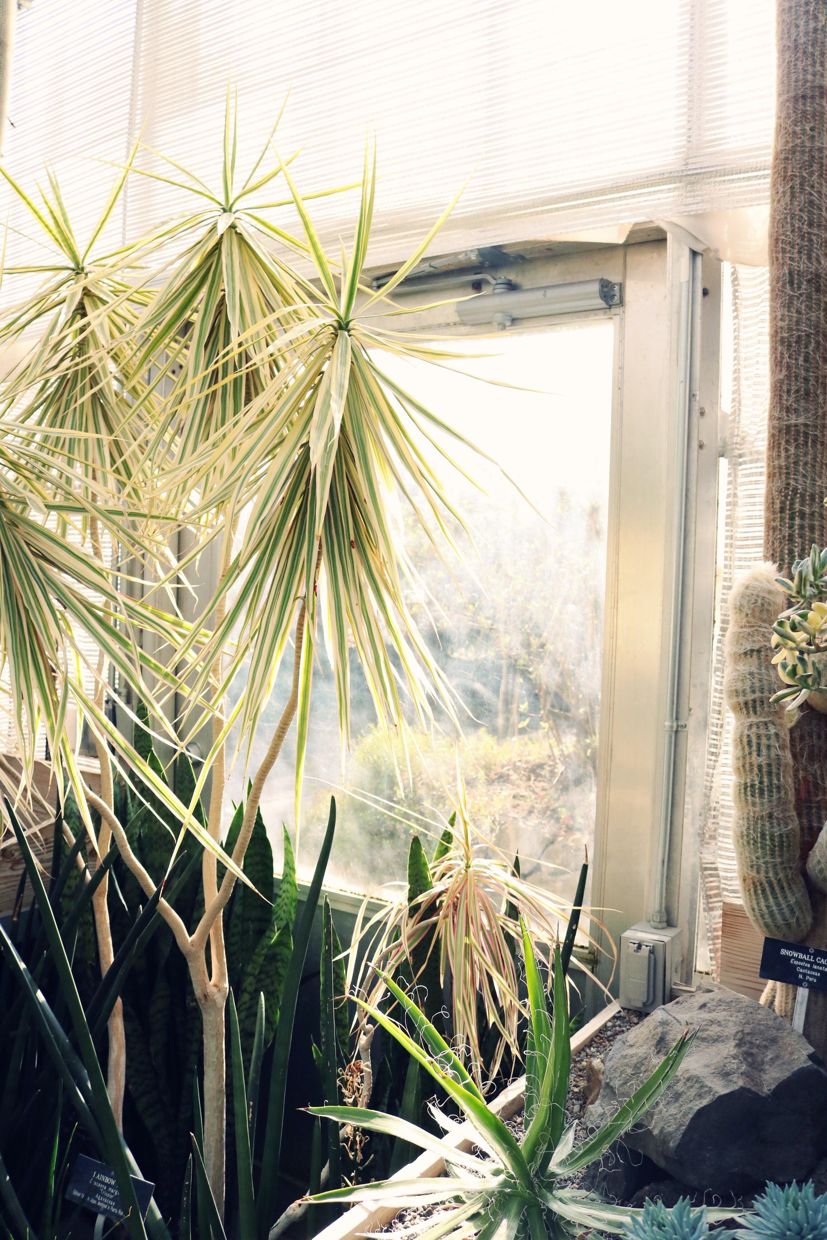 Yucca Plant Near Windowpane