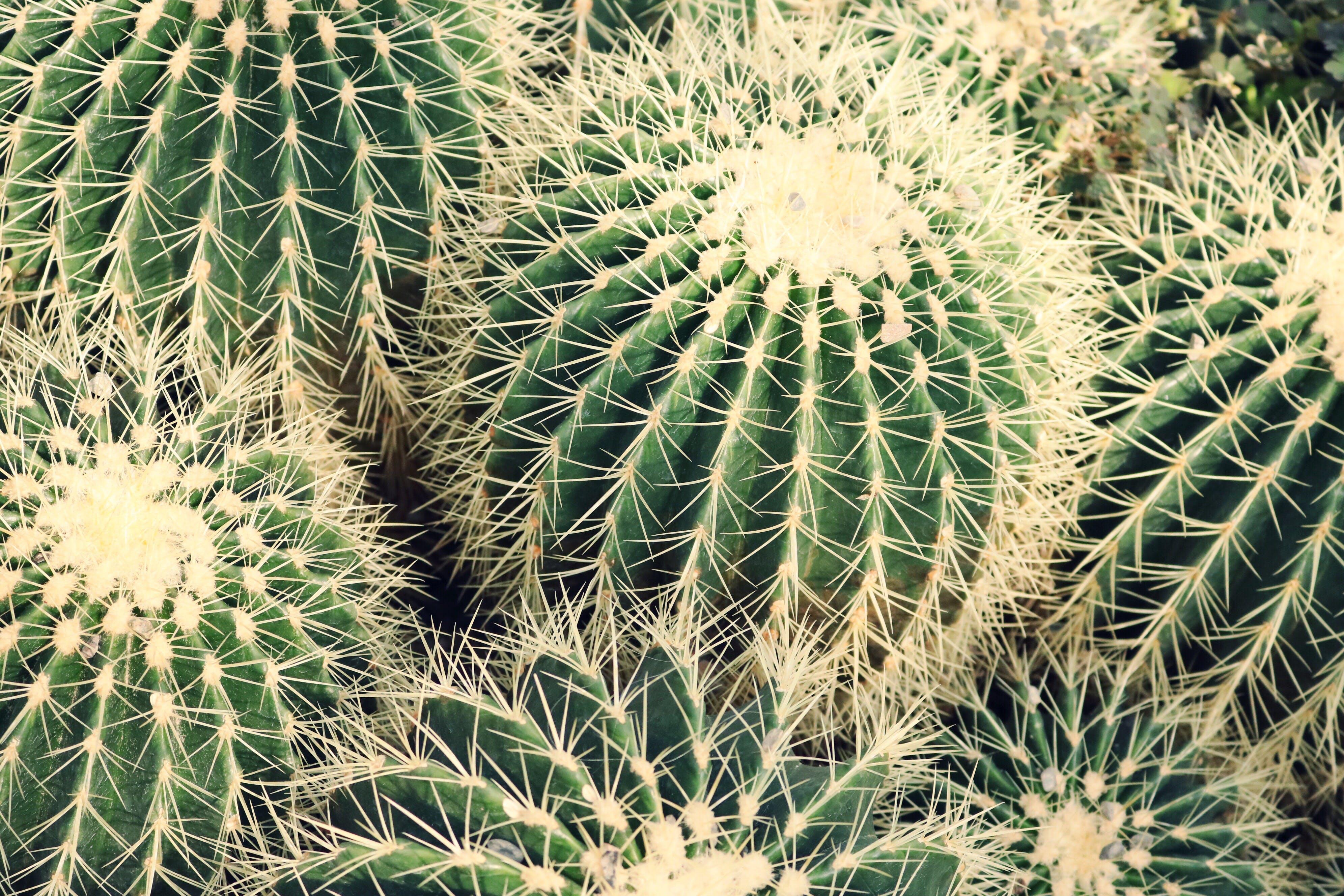 Closeup Photo of Cactus Plants