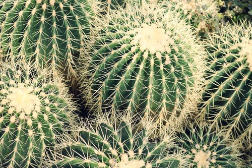 Closeup Photo of Cactus Plants
