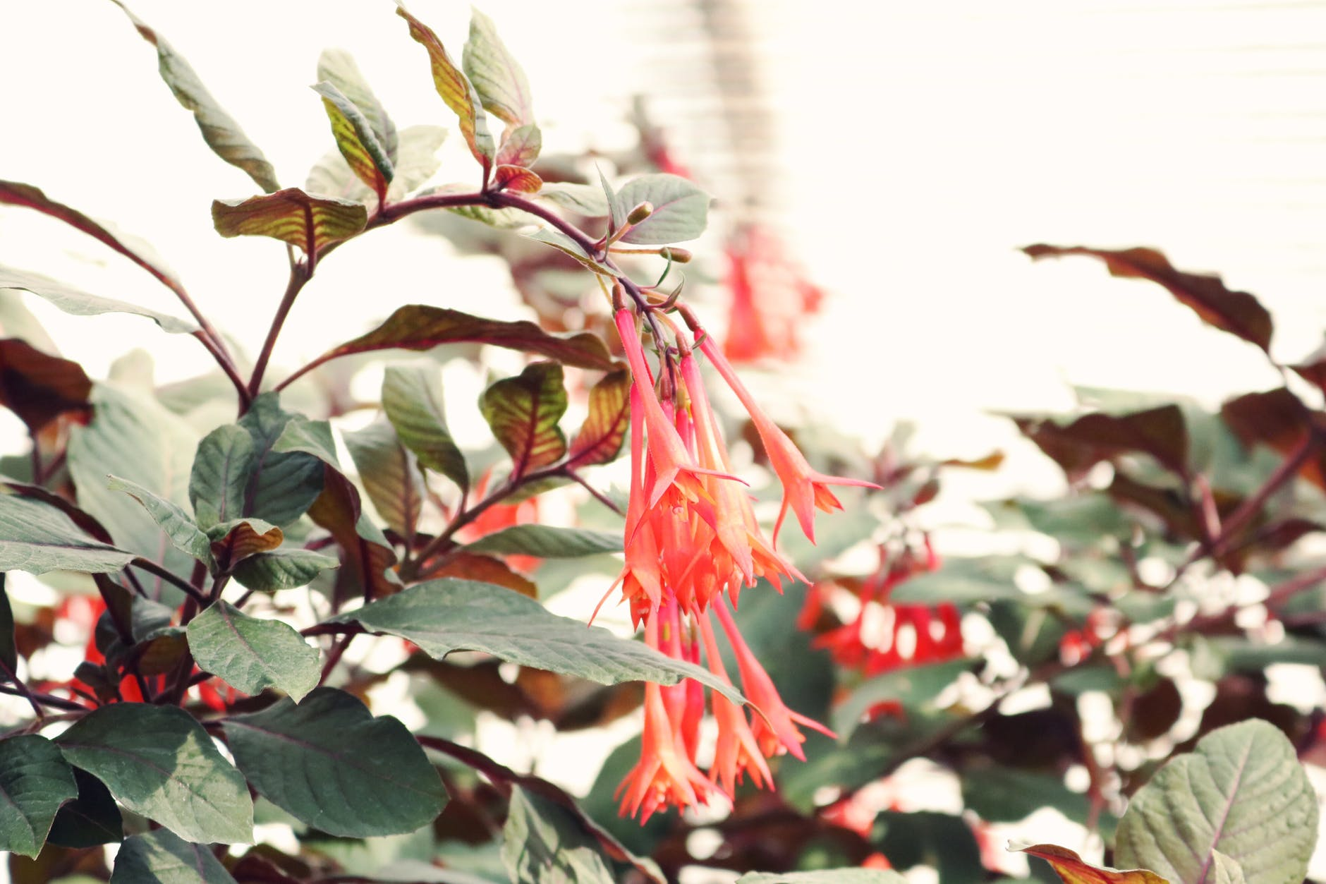 Honeysuckle | Stunning Climbing Plants Perfect For Trellis And Arbors