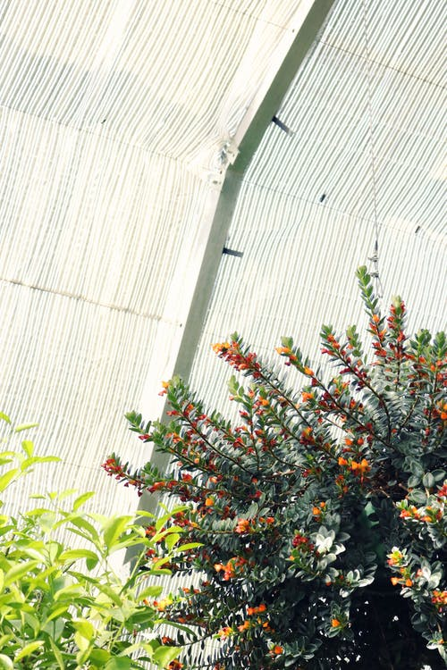 Green-leafed Plants Inside Greenhouse