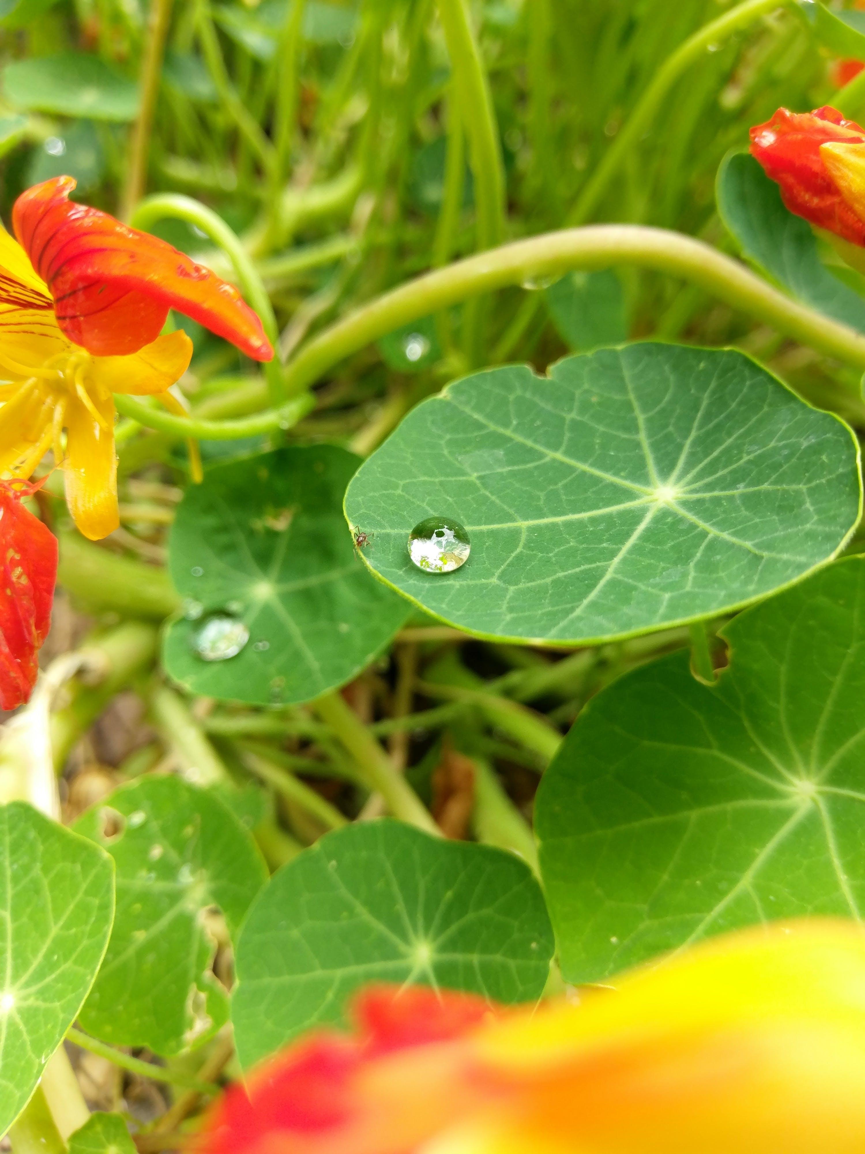 Gratis lagerfoto af dugdråbe, farve, grønt blad, myre