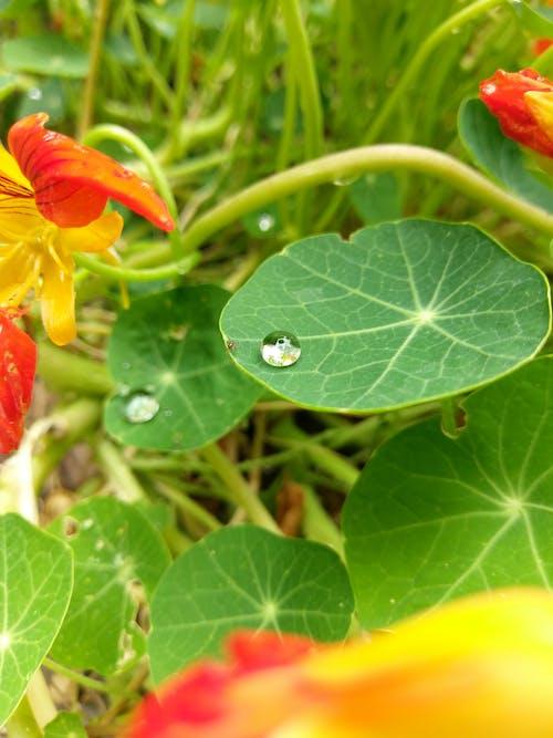 朝露, 緑色の葉, 色, 蟻の無料の写真素材