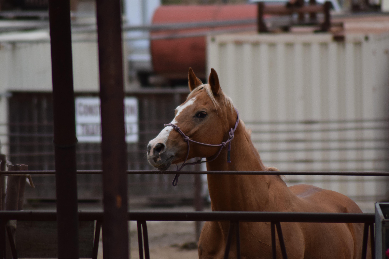 Gratis lagerfoto af dybde, hest