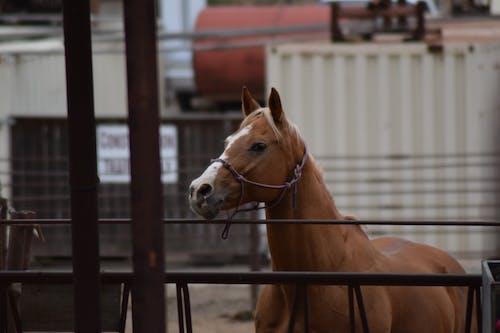 Ảnh lưu trữ miễn phí về con ngựa, độ sâu trường ảnh