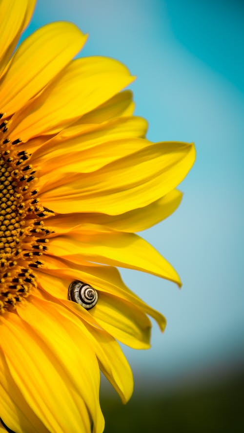Photos gratuites de brillant, couleur, croissance, délicat
