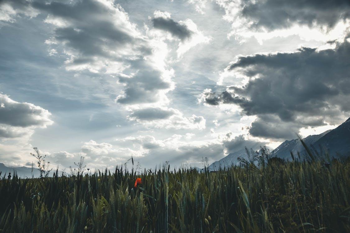 HD-обои, гора, дневной свет