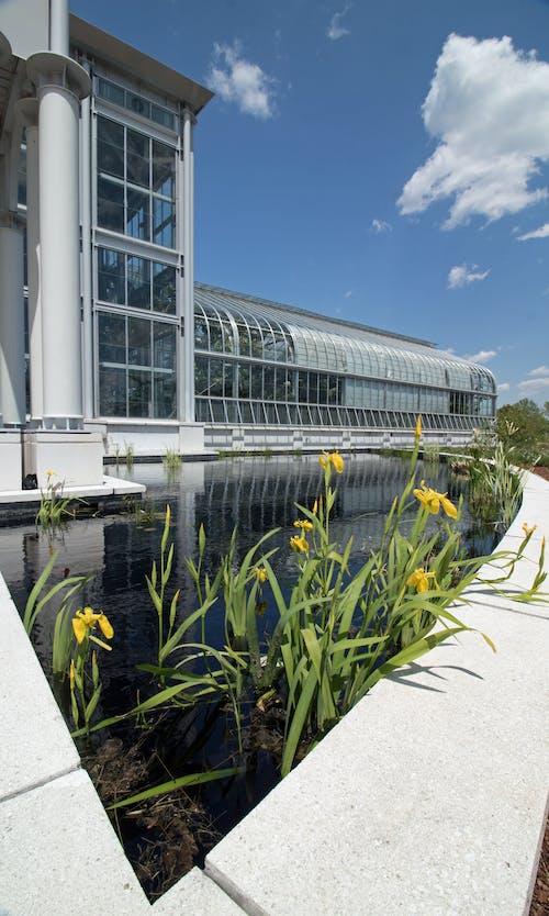 Gratis lagerfoto af arkitektonisk, lewis ginter, rva, Tulipaner