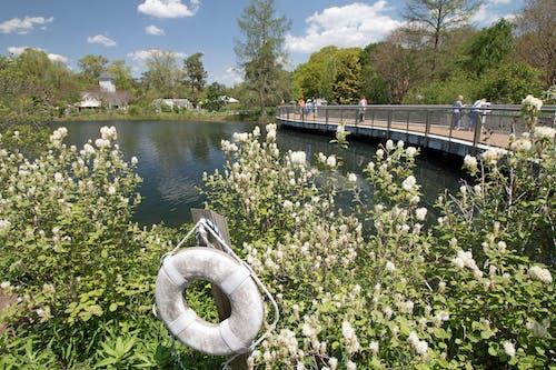 Gratis lagerfoto af fodbro, forår, lewis ginter, redningsvest