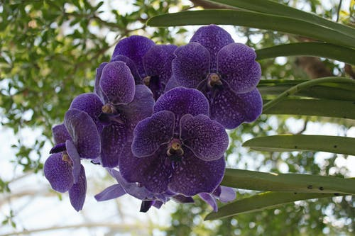 Gratis lagerfoto af lewis ginter, Orkidé, rva