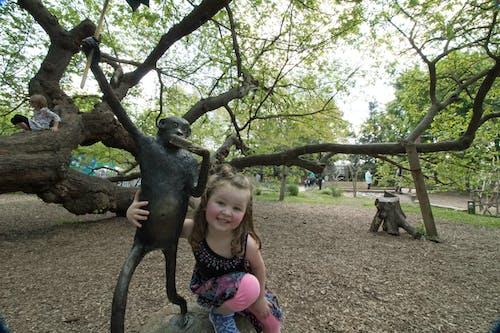 Gratis lagerfoto af abe, forår, lewis ginter, park