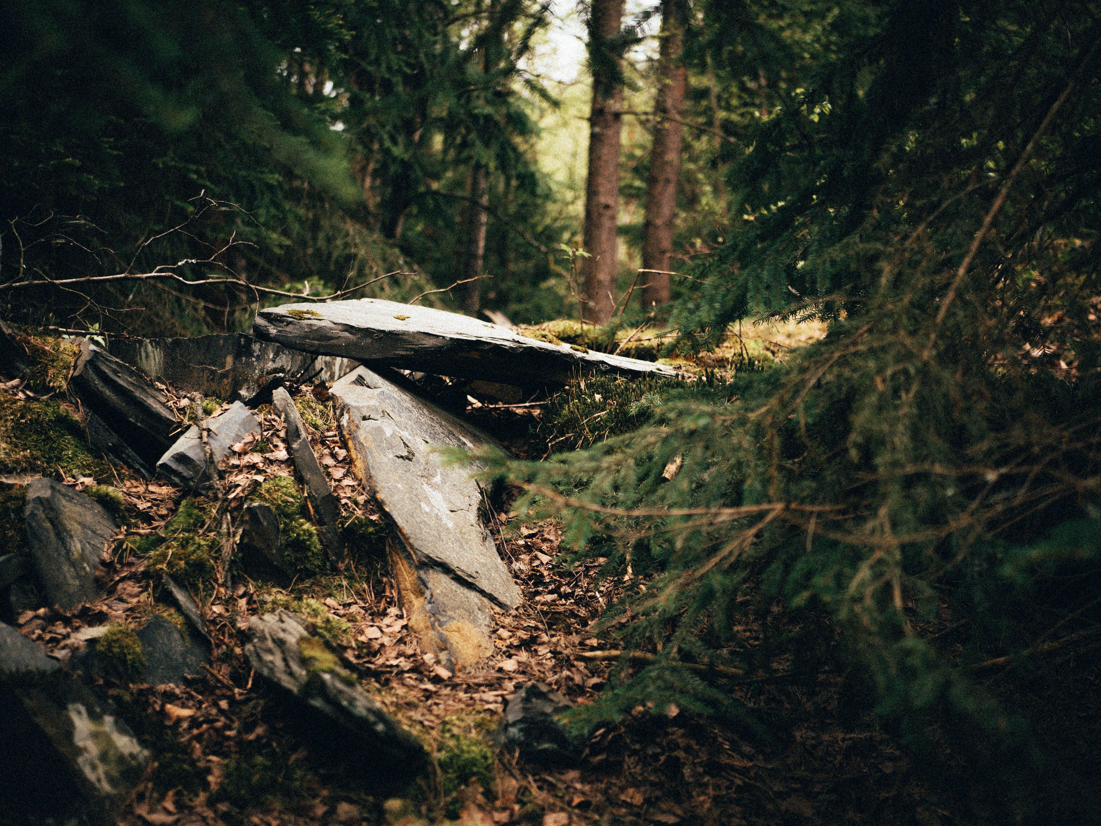 Kostenloses Stock Foto zu bäume, felsen, fokus, landschaft