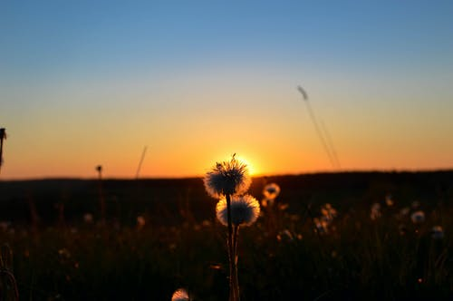 Free stock photo of flowers, summer, sunset