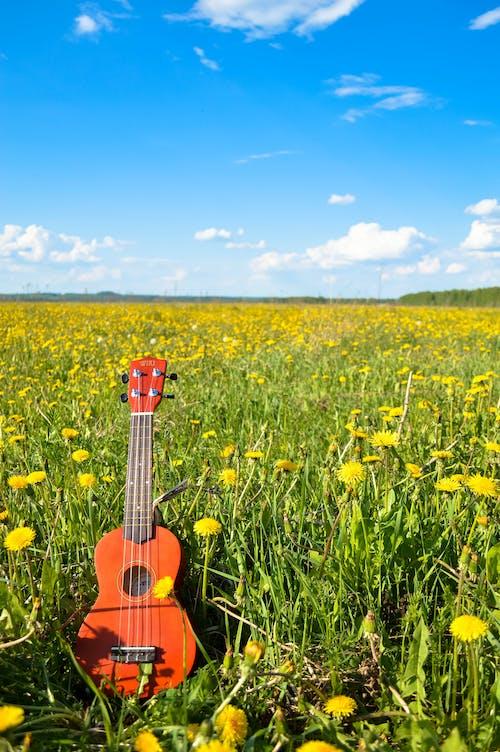 Free stock photo of flower, guitar, sky