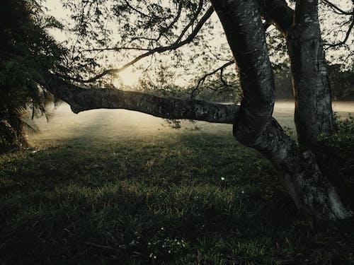 Photos gratuites de arbre, aube, bois, branche